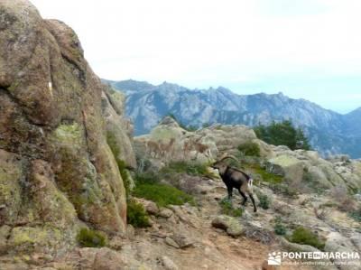 Sur Maliciosa - El Peñotillo; fin de semana;senderismo con imaginación; rutas montaña